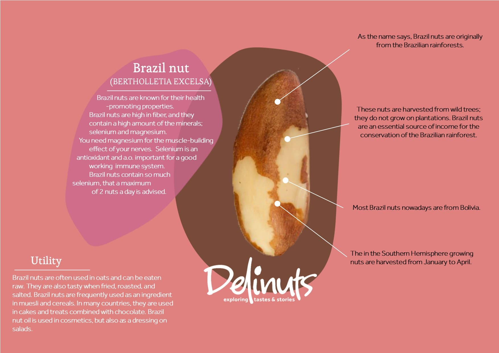 Brazil nut with information